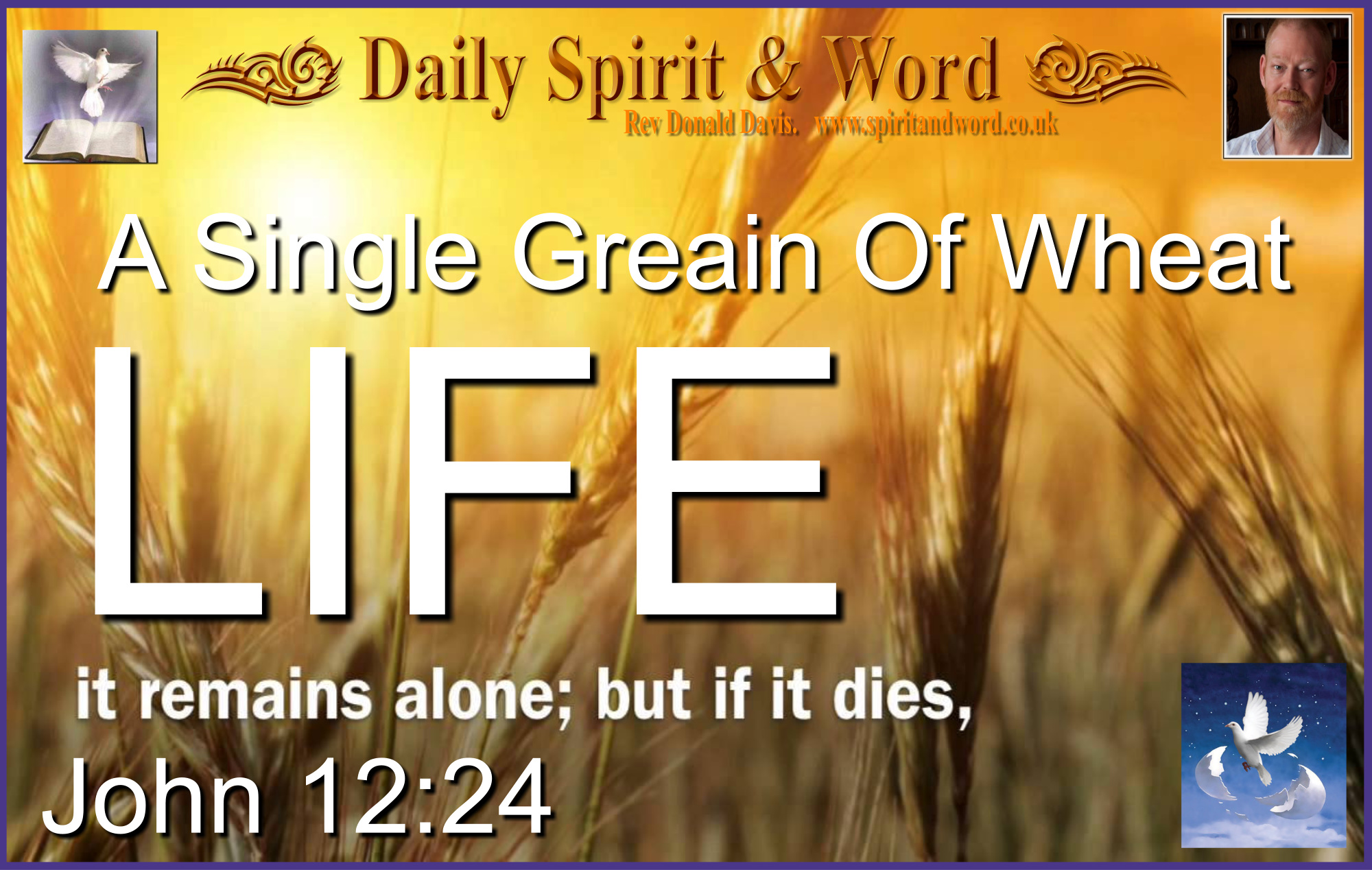 Life and Harvest from the death of the Wheat Grain